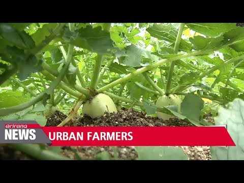 Cultivating Hope ? Urban Farmers