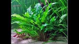 Danh mục các loại cây thủy sinh đẹp dễ trồng