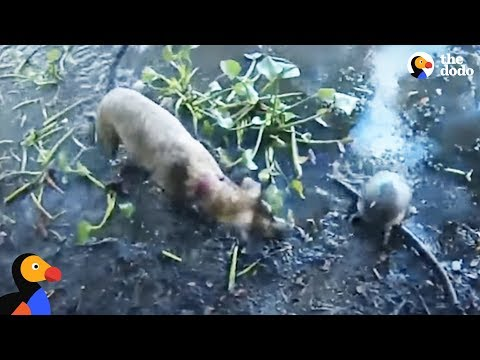 Dog Helps Dad Rescue Turtle Caught in Wire | The Dodo