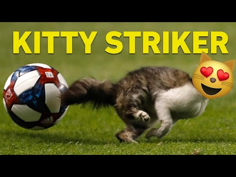 Cat Runs On Soccer Field & Almost Scores A Goal!