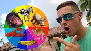 monster-animal-wheel-what-you-pick-is-what-you-buy-expensive