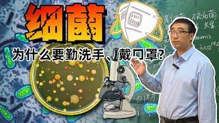 细菌对人类有什么作用?为什么要勤洗手、戴口罩?