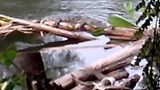 Cocodrilos en el rio de aldama tamaulipas