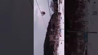 Обезьяны в Японии боятся снега и ходят по проводам