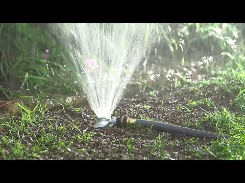 Watering New Grass Seed - Learn How Long, How Often, How Much and Best Times to Water New Grass