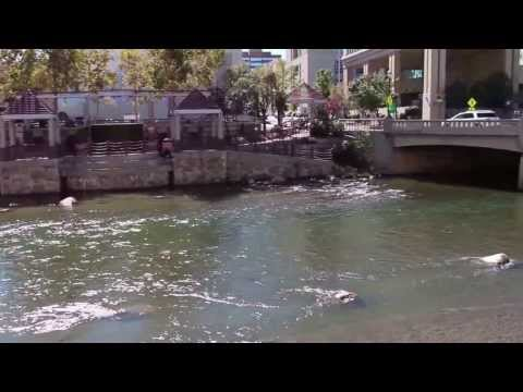 The Truckee River in Downtown Reno, NV