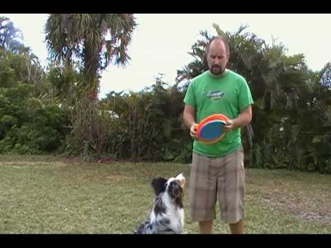 Butterfly Throw  for Disc Dogs