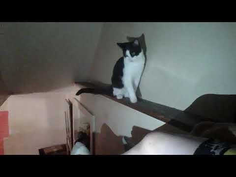 dog wrestle and cat documentary 4