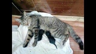 Бездомная кошка. Маша и ее дети...