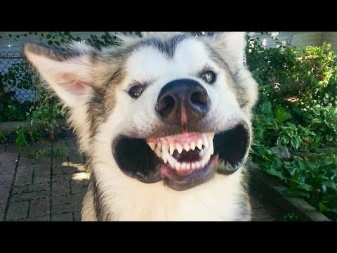 🤣 Funniest Cute 😻Cats And 🐶 Dogs  - Try Not To Laugh - Funny Pet Animals' Life 😇