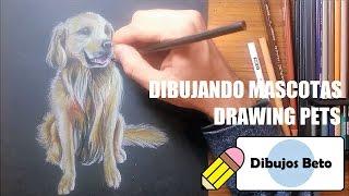 Dibujo de MASCOTAS / Drawing PETS