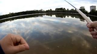 Ловля плотвы тенкарой на мушку • Пруд и речка • Рыбалка в Москве
