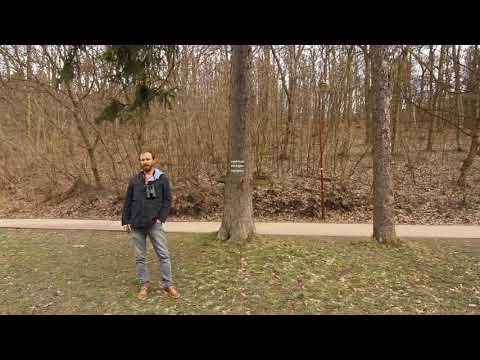 Poznávanie Vtáčích Hlasov - Sýkorka Uhliarka (Coal Tit)