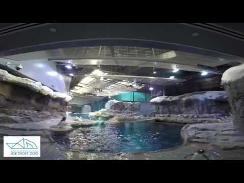 Detroit Zoo | Polk Penguin Conservation Center