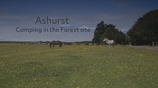 Ashurst Camping in the Forest site