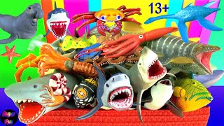 Sea Animals - Sharks, Whales, Fish, Shellfish, Cephalopods, Crustaceans, Turtles, Rays 13+