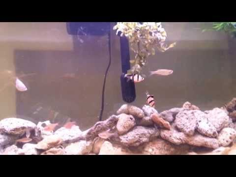 55 gallon tropical Fish tank aquarium