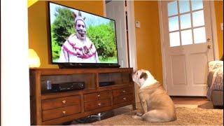 Bulldog Watches AHS Has Remarkable Reaction To Killer Clown