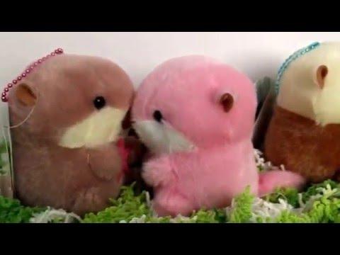 Amuse Mucchiri Rakkun Otter Review