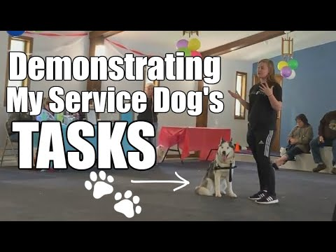 I demonstrate my Service Dog's tasks in front of EVERYONE 4/27/19