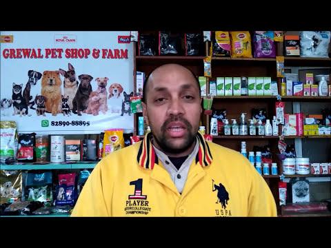 Pet Care - Having a New Dog - Bhola Shola