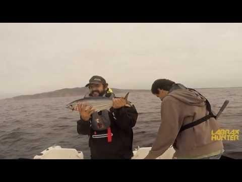 LABRAX HUNTER #4 - Skipjack Tuna Em Cascais - Trolling Fishing
