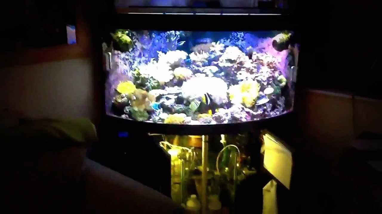 reef tank juwel trigon 350l 2 youtube. Black Bedroom Furniture Sets. Home Design Ideas