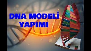Dna Modeli Yapımı - Dna Model Making