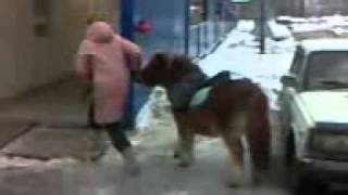 Moscow walks. The girl and her pony. Девушка и её пони.
