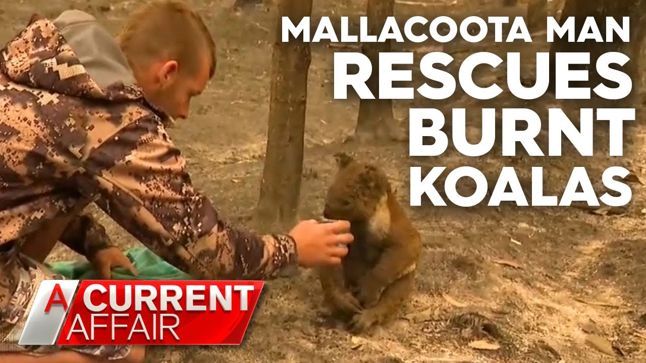 Local hero rescues koalas from fire devastation | A Current Affair