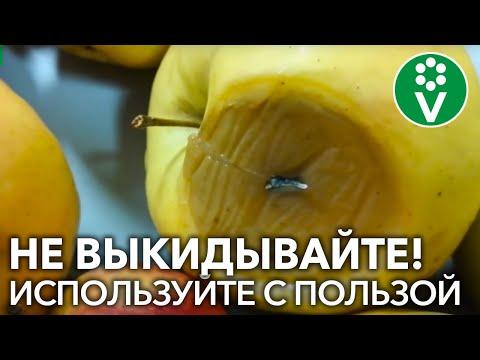 Какую ПОЛЬЗУ могут принести испорченные яблоки и закатки?