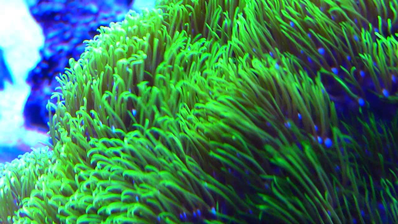 Login Coral