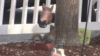Horse Head Squirrel