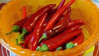 Приправа из Красного Острого Перца к Первым и Вторым Блюдам/Spicy Pepper Seasoning