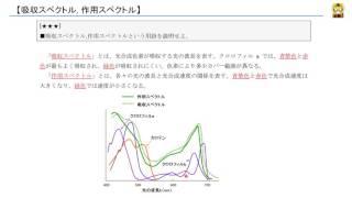 吸収スペクトル, 作用スペクトル 【高校生物】