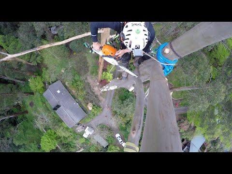 Sherbrooke Mountain Ash Dismantles Part 1