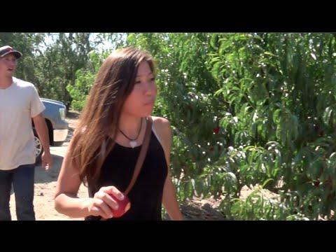 Farm Tour: California Fruit Orchard