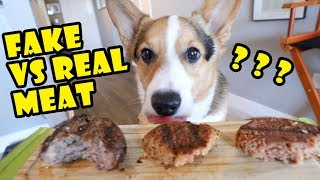 Does Corgi Dog Prefer Beyond Meat Burger? || Life After College: Ep. 649
