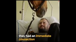 DYING MAN TEARS UP AS EMPATHY HORSE LOCKS EYES. YOU MUST WATCH!