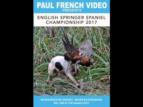 2017 English Springer Spaniel Championship
