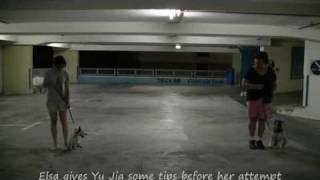 Wish Upon A Bone - Tan Yujia & Jojo - Obedience Training Lesson 3 Part 1