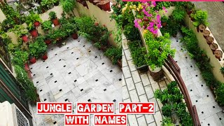 Jungle garden overview part-2 with names, terrace garden tour, garden update, monsoon garden tour