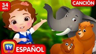 Vamos a ir al bosque (Colección) - Animales Salvajes | Canciones Infantiles Populares de ChuChu TV
