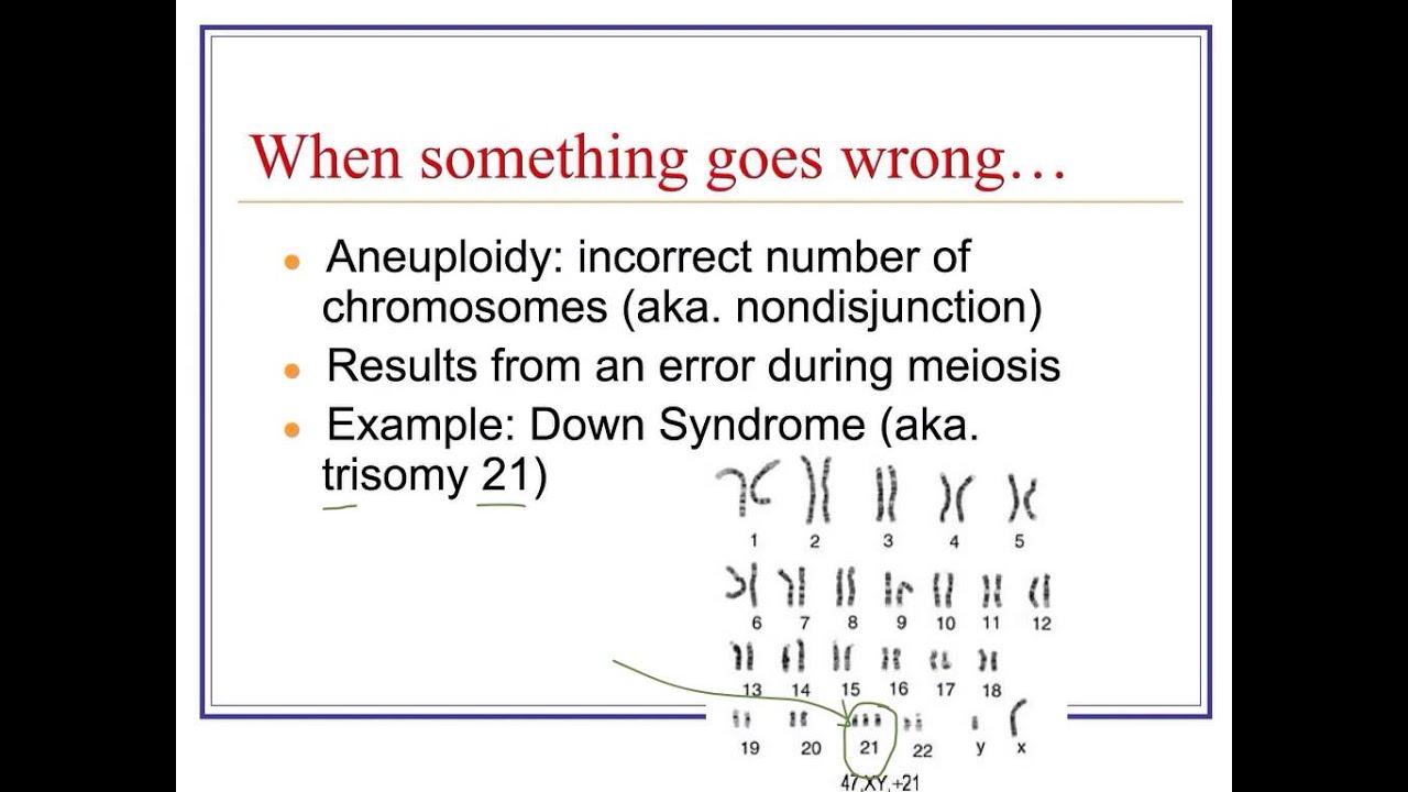 Karyotypes Nondisjunction Amp Mutations
