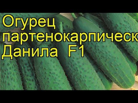 Огурец партенокарпический Данила. Краткий обзор, описание характеристик cucumis sativus