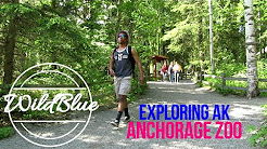 Exploring Alaska: The Anchorage Zoo