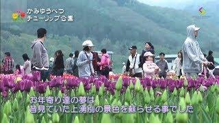 チューリップは、江戸時代末期に日本に伝わった馴染みのある花です。 網...