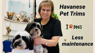 Havanese Pet Trims