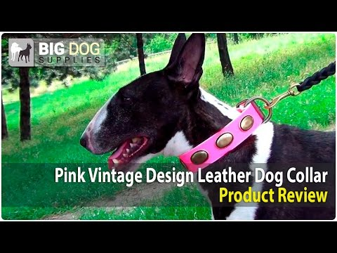 Bull Terrier and Other Dogs Wearing Pink Vintage Dog Collar