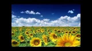 Летние цветы.Цветы, цветущие все лето.(http://create-hands.ru Видео цветов.Цветы, которые цветут летом. https://www.youtube.com/user/Liduhcka ..., 2013-02-21T20:23:10.000Z)